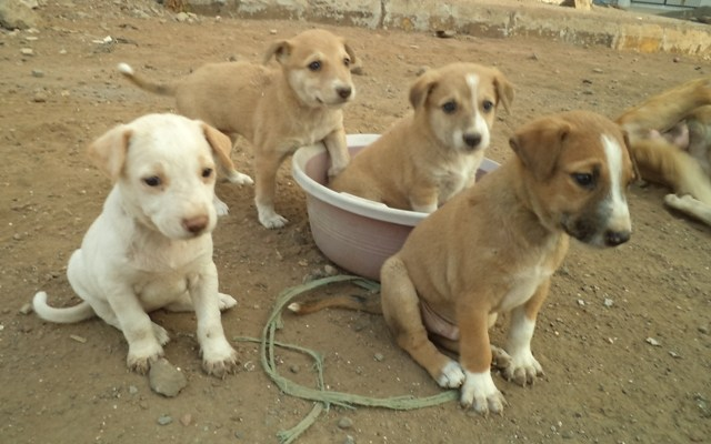Rules on breeding, sale and purchase of dogs on the anvil