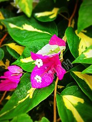 Greens - Flowers after rains looking brighter and dancing with the cold breeze