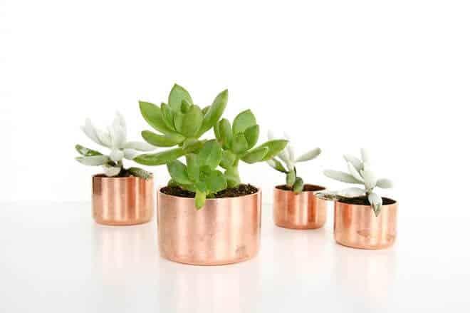 copperplanters3