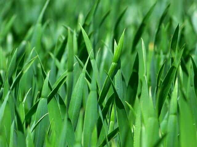 grass-383284_640