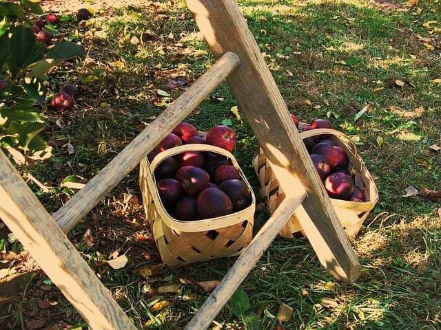 apples-399870_640