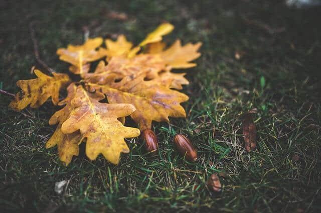 leaves-791245_640