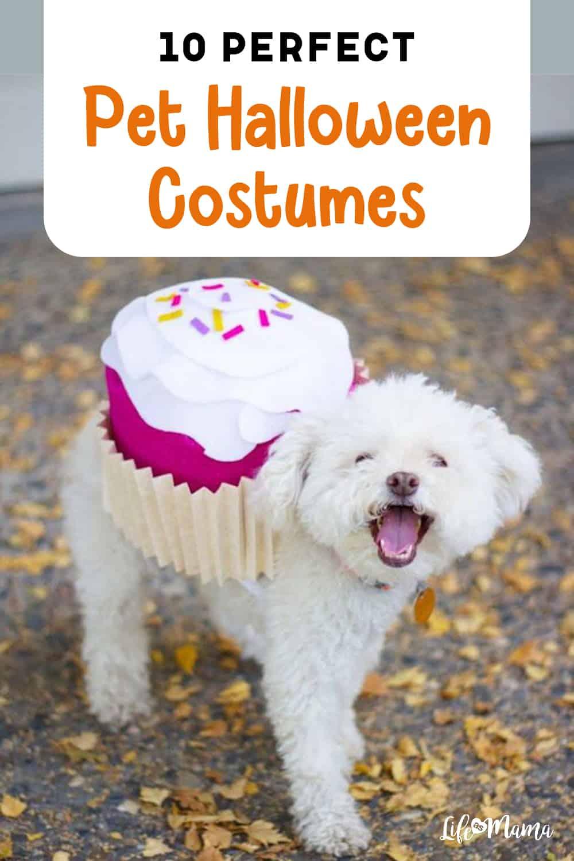 10 Perfect Pet Halloween Costumes