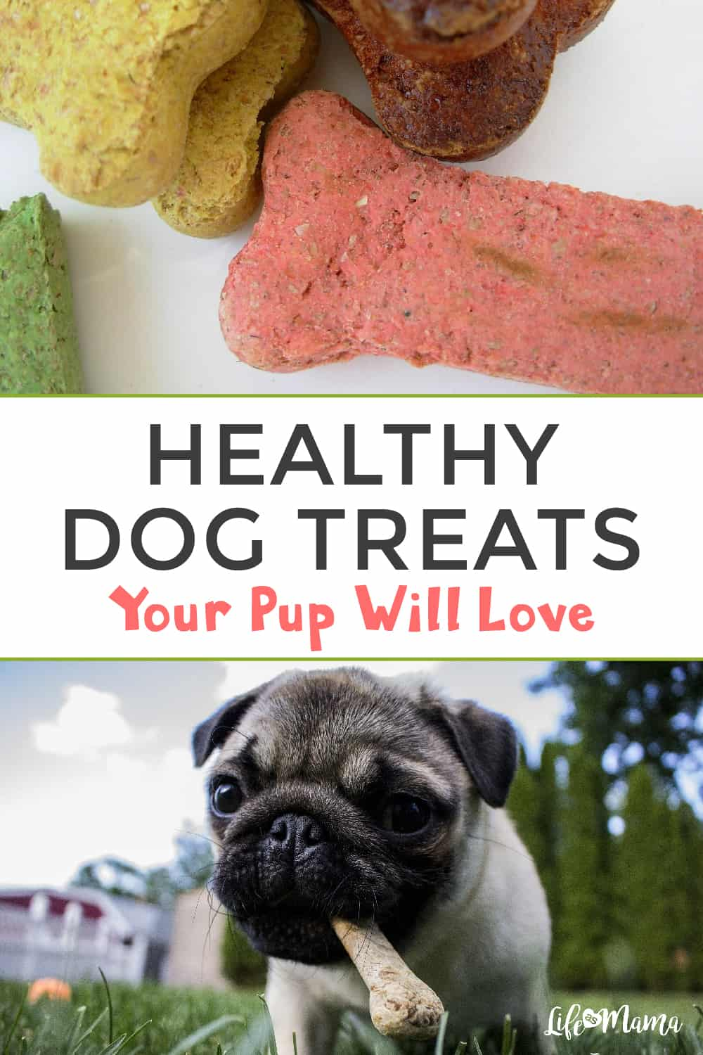 Delicious Dog Treats Your Pup Will Love