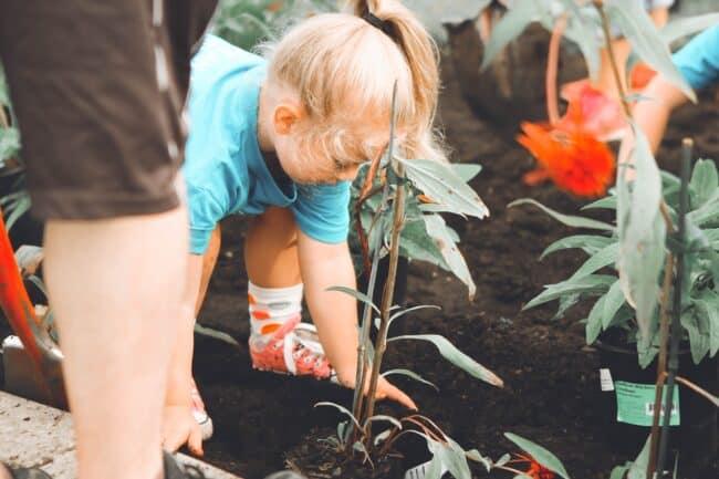 creative family activities, gardening