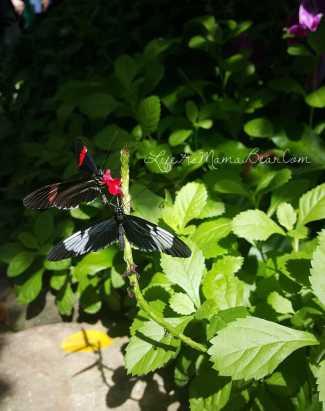 meijer-gardens-butterfly