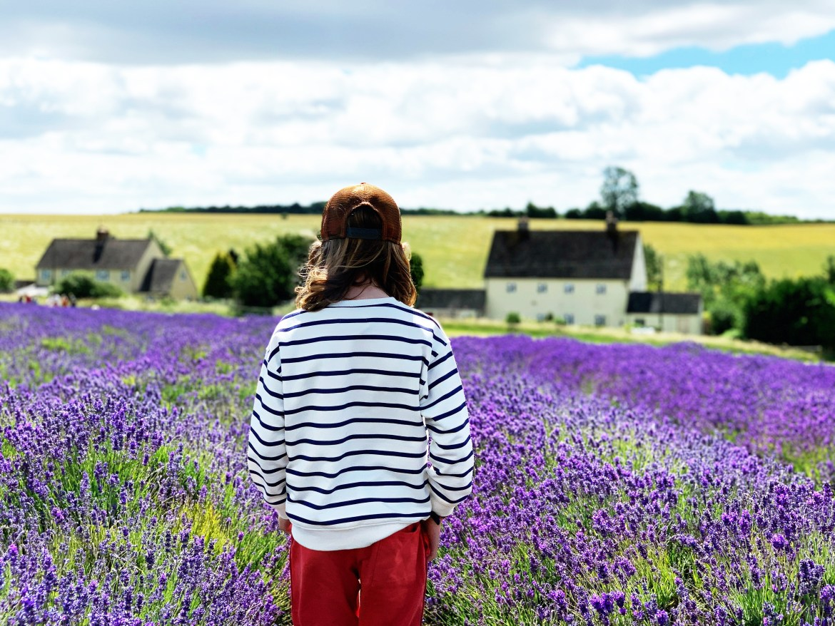 Visiting the Cotswolds Lavender Fields