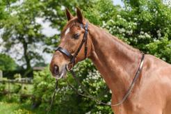 Wilson Cavesson Bridle