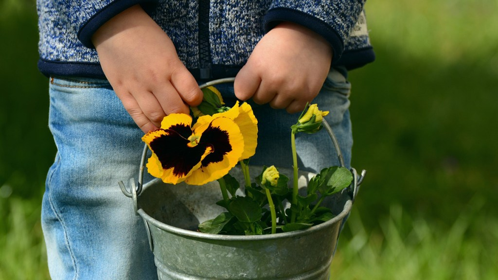 Nature improves children's health. Image shows child holding garden bucket with pansies growing in it.