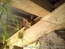 Catsby-nextday (2)