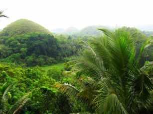bohol - da jungle