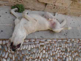 just-let-sleeping-dogs-lie