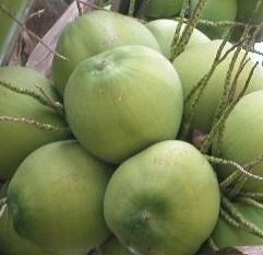 kelapa muda banyak manfaatnya