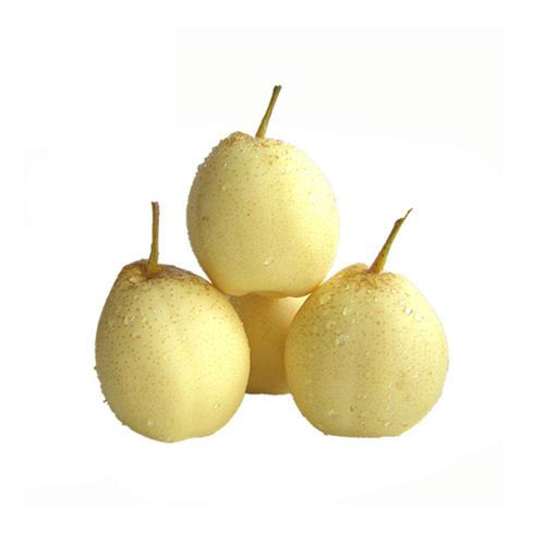極高膳食纖維 - 鴨梨