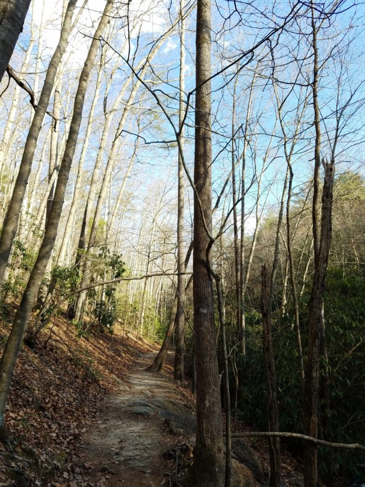water, trees, sun, forest, adventure, family, march, 2016, stone mountain