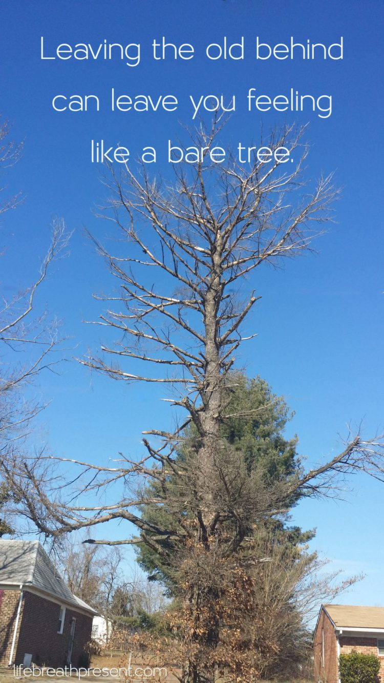 tree, bare tree, fall, dead tree, voice, quote, behind, finding self, self love, self care, travel, discovery, define