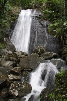 2009-05-19 El Yunque Rainforest 64