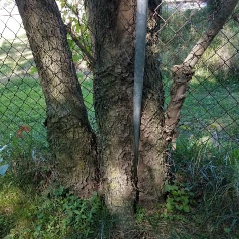 tree fence pole inside perserverance © 2017 Linda Luke
