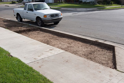 frontyard parkway xeriscaping (drought tolerant) during