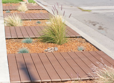 drought tolerant plants in the front parkway:Update on Xeriscaping the Front Parkway