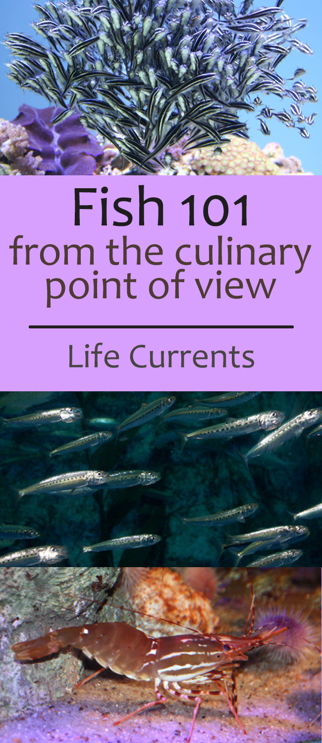 Fish 101 – fish, from the culinary point of view
