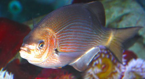 Fish 102, categorization of seafood perch