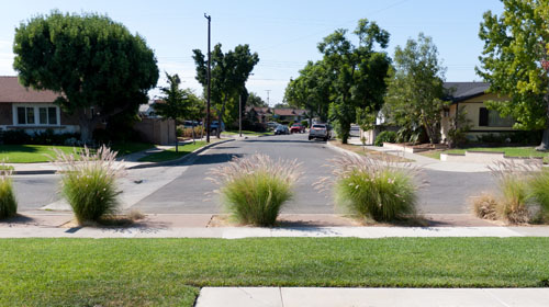 xeriscape front parkway with drought tolerant plants: Update on Xeriscaping the Front Parkway