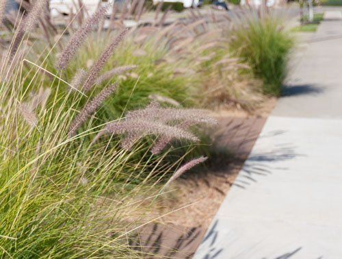 Update on Xeriscaping the Front Parkway