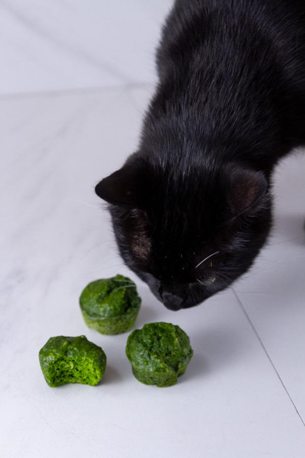 a black cat looking at green mini muffins.