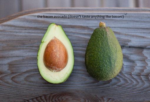 the Bacon avocado Avocado Reviews