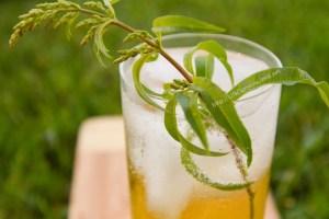Lemon Verbena Lemongrass Soda https://lifecurrentsblog.com