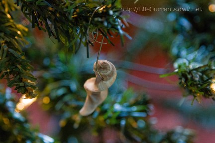 Christmas Shells 2013 | Life Currents Enter to win a $300 amazon Gift Card