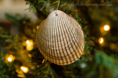 Christmas 2013 decorations nautical Shells | Life Currents