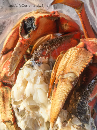 How to Cook Dungeness Crab