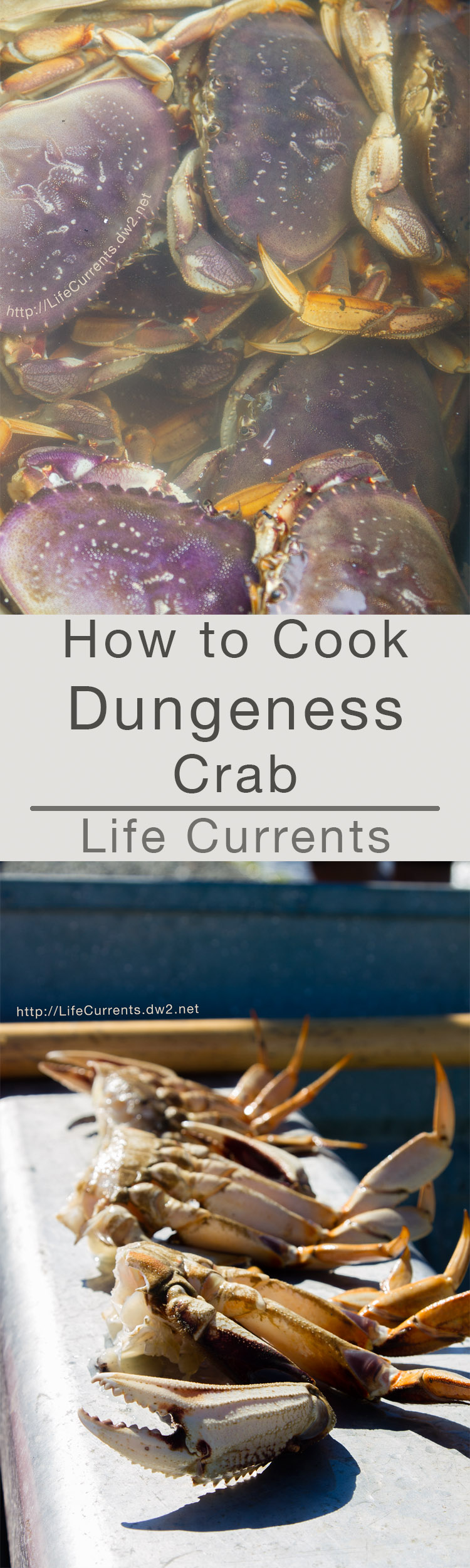 How to Cook Dungeness Crab - Since I've learned quite a bit about Dungeness Crab, I thought I'd share how to cook it.
