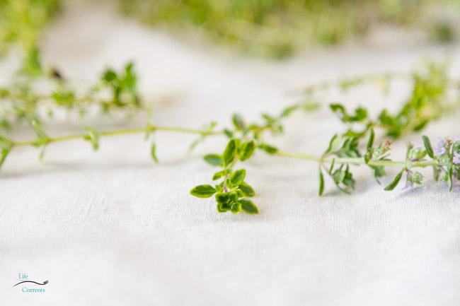 Lemon-Thyme Sorbet using lemon thyme herb straight from the garden