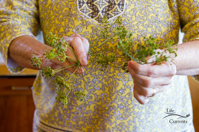 hands holding dill flowers