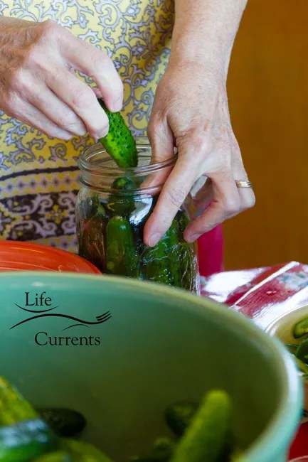 Spicy Garlic Dill Pickles - pack the jars tightly with the cukes