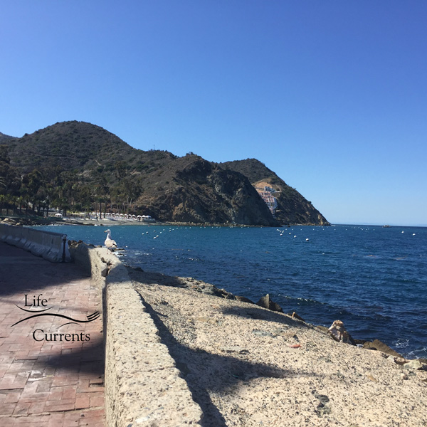 Can't Miss Activities on Catalina Island - spend the day relaxing, eating, and exploring the island