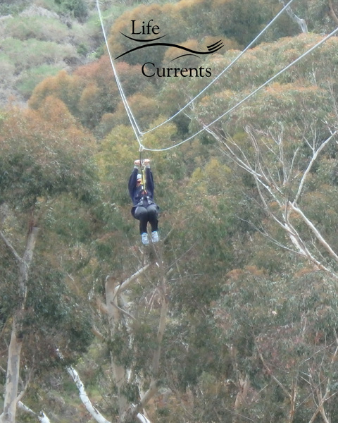 Can't Miss Activities on Catalina Island - Zip Lining