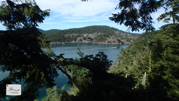 a view of Deception Pass from the 200 foot tall tree