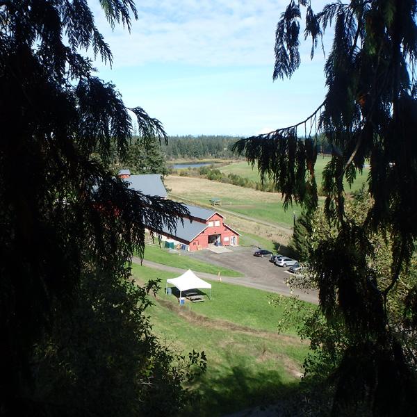 Kristoferson Farm on Camano Island through the trees