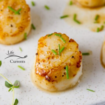 square crop of Vanilla Dusted Scallops with fresh chives as garnish