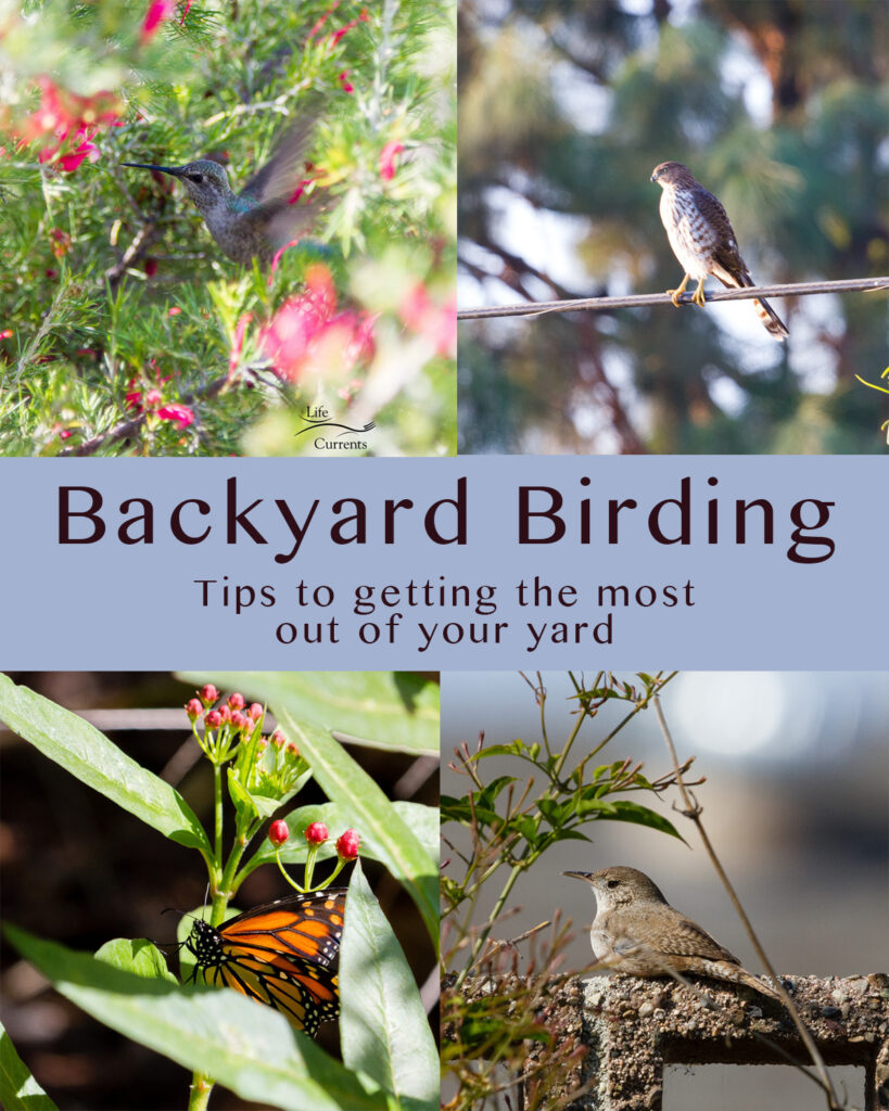collage of 4 images: upper left: hummingbird in a plant. upper right: hawk on a wire. bottom left: monarch butterfly in milkweed. bottom right: house wren on a wall. Title in the middle: Backyard Birding. Tips to getting the most out of your yard