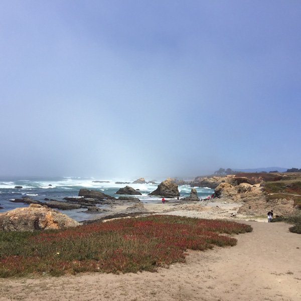 The fog is clearing from the beach. Sandy paths and beach plants in the picture