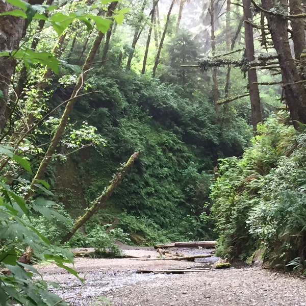 Fern Canyon entrance with lots of lush ferns