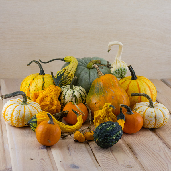 various squash, pumpkins, and gourds stacked on a wooden table and bacground