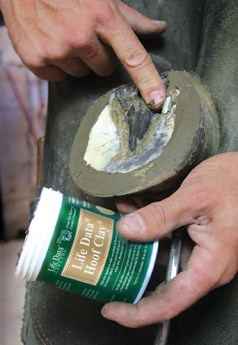 Remedies for Equine Thrush