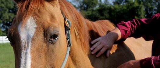 Brushing Horse Coat