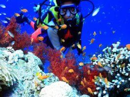 Diving in East Africa Mombasa, Kenya